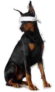 watchdog-337x475